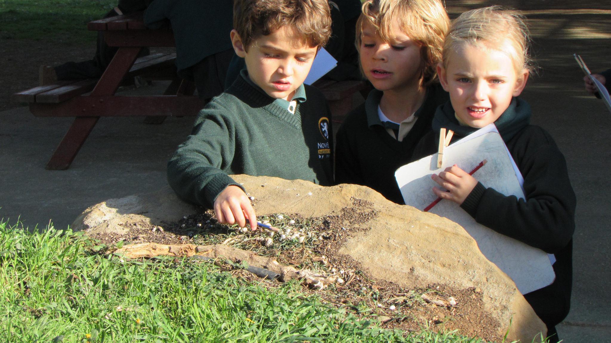 Proyecto minibeasts de Novaschool Sunland International