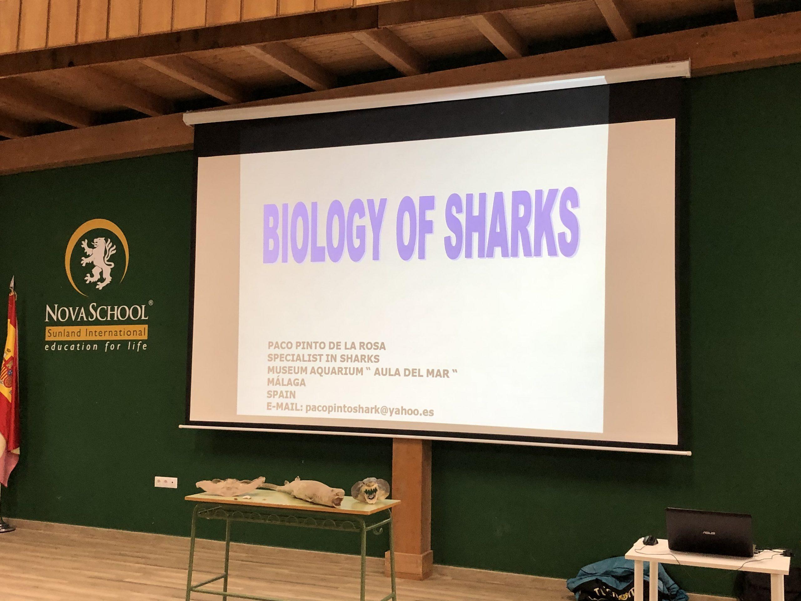 sharks talk